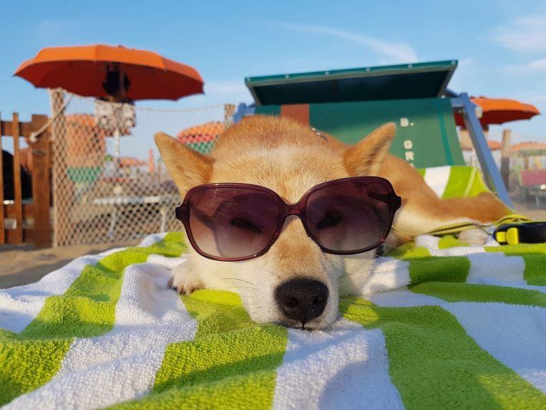 La miglior spiaggia per cani a Rimini