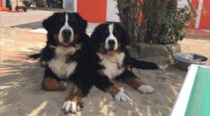 spiaggia per cani rimini romagna